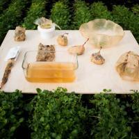 Альтернативная жизнь чайного гриба. Оказывается, им можно заменить пластиковую упаковку