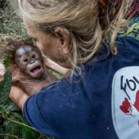 Лесная школа орангутанов. Первый урок – как выжить