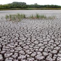 Будут пустыни вместо лесов? Что происходит с осадками в Беларуси