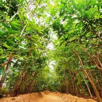 Новая панацея или самообман? Чем нам помогут леса Мияваки