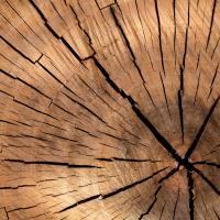 Мнение. Сажайте деревья, а не людей