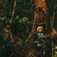 ООН: лучшая защита для леса – люди, живущие в нём