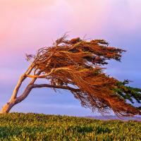 Мнение. Нам срочно нужен ветер