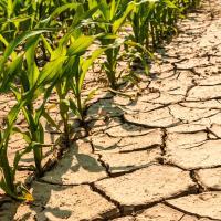 Как спасти растения в жару?