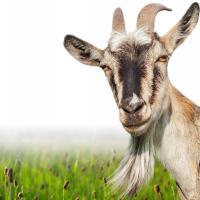 Если лечить животных, то не будет пандемий. Зачем инвестировать в ветеринарию?