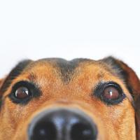 Собачка и таракан. Как животные стали символами беларусских протестов