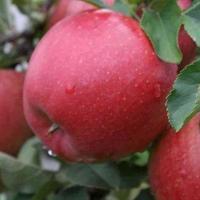 Как Мингорисполком потратил бюджетные деньги на яблоневый сад возле прудов с нечистотами