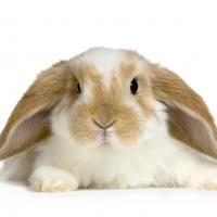 В бизнес-центре Omega Tower из фотозоны наконец убрали живых кроликов. Что это вообще было?