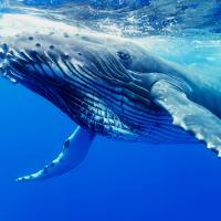 Почему киты такие большие?