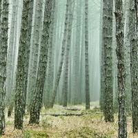 В Европе заготавливают всё больше древесины. Что это значит для климата?