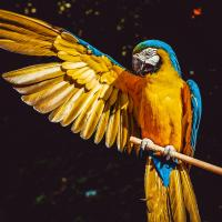 Как переехать за границу с хомяком, попугаем или рыбкой