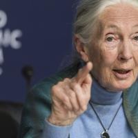 Джейн Гудолл: Если мы не сможем адаптироваться после covid-19, человечеству конец