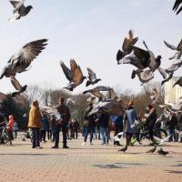 Активисты в Бресте получили по 15 суток. Проинформирован Комитет по соблюдению Орхусской конвенции ЕЭК ООН