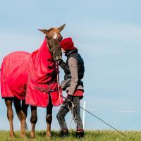 Лошадки-пенсионерки. Как спасают коней, списанных на мясо