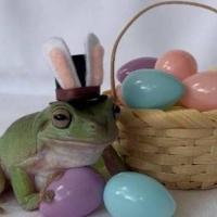 В США в конкурсе пасхальных кроликов победила лягушка