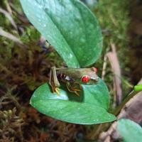Экзатычныя жабкі. Як стварыць свае міні-тропікі ў кватэры