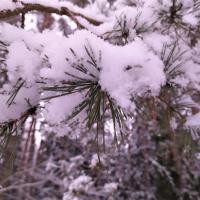 «Все последние 30 лет мы наблюдаем, как зимы становятся все теплее и теплее…»