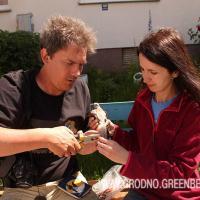 Гродненские орнитологи обследовали гнезда пустельги и окольцевали птенцов