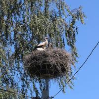 «Есть птица – есть жизнь». Сельчане задают тренд безопасных буслянок на опорах ЛЭП