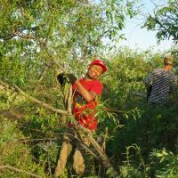 Студент из Нигерии помог расчистить Туровский луг от кустарника