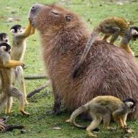 Ученые уточнили суть теории Дарвина: выживают более дружелюбные, а не самые сильные виды