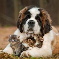 Юрист Александр Войтешик: «В Беларуси не ввели, а актуализировали налог за владение собаками»