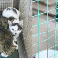 Остановите массовое убийство кошек и собак!