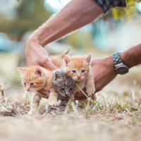 «Фото котенка сложно конкурировать с фото избитых людей». Как переживают протесты домашние и бездомные животные?