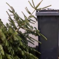 «Новогодний компост». Репортаж о том, как в Минске перерабатывают ёлки