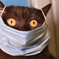 Кошек, инфицированных COVID-19, может быть больше, чем считалось