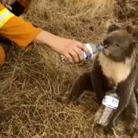 Дроны восстанавливают австралийские леса (видео)