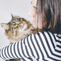 Объятия с котиками спасают от депрессии на фоне COVID-19 — исследование