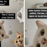 Появилось приложение для перевода кошачьего языка на человеческий