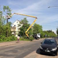 Теплотрасса — не повод рубить на корню. Как отстояли деревья в Минске
