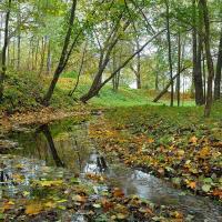 В каком состоянии находятся беларусские леса?