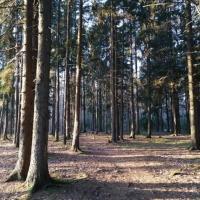 «Не вырубайте наше будущее!» Жители Жодино написали петицию против стройки на месте леса
