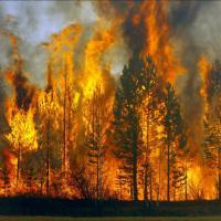 Еўропа ахоплена ляснымі пажарамі. У Беларусі іх колькасць пакуль меншая за мінулагоднія паказчыкі