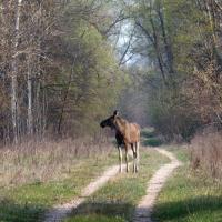 Животные-мутанты и рыжий лес: 10 вопросов эксперту о дикой природе Зоны