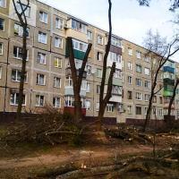 Налысо не стричь. Рассматриваем новые правила ухода за озелененными территориями в Беларуси