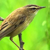 Европа определилась с видами птиц для охраны. В Беларуси таких как минимум шесть