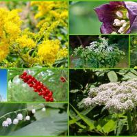 Петрушка или цикута? Сможете ли вы отличить съедобное растение от опасного для жизни (тест)