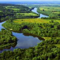 «Сам факт наличия лесопилок у лесоохранных учреждений уже ненормален!» Нацпарк «Припятский» собирается купить новую лесопилку