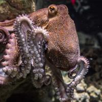Исследование: осьминоги шлепают рыб, чтобы они хорошо себя вели