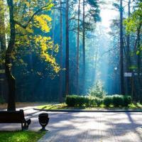 Свабоду дзеянняў – спецыялістам, веды пра паркі – гараджанам, адзіную форму афармлення – дрэвам
