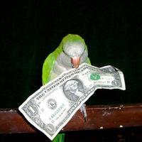 С жителя Барановичей суд взыскал стоимость 440 «улетевших» попугаев