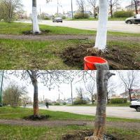 Разбелка — новое направление радикального урбанизма. Как россиянин разбелил деревья