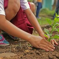 Минчане смогут оставить заявку на озеленение территорий через сайт