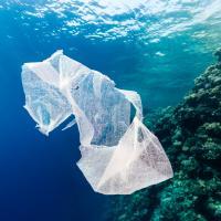 Биоразлагаемый пластик не решит проблему загрязнения Мирового океана