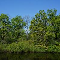 На болотах Полесья ищут «затерянные» первобытные леса – их площадь, возможно, больше Минска