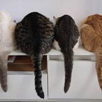 Коронавирус и домашние животные: как обеспечить счастливую жизнь коту в изоляции
